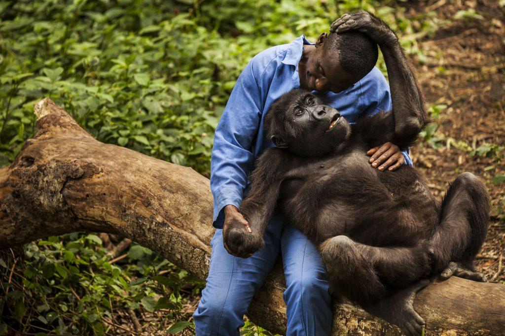 Congo Gorilla Tours